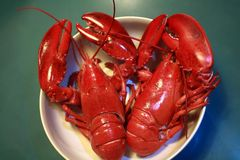 Boiled red lobsters. Two freshly cooked lobsters in a white bowl on a blue kitchen table. Focus on the tails royalty free stock photo