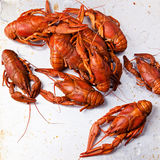 Boiled red lobsters Royalty Free Stock Photos