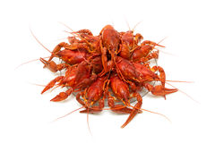 Boiled river crayfish on a plate on a white background. Stock Image
