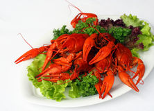 Boiled river lobsters Stock Photo
