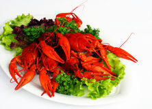 Boiled river lobsters Royalty Free Stock Images