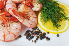 Boiled royal Argentine shrimp with lemon, dill and pepper on a plate Royalty Free Stock Photo