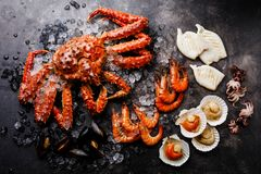 Boiled Seafood on ice - Crab, Shrimp, Clams, Scallops. Boiled Seafood on ice - King Crab, Prawn Shrimp, Mussels Clams, Scallops in shells, Octopus mini, Squid on stock images