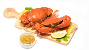 Boiled Serrated mud crab  on a wooden plate Royalty Free Stock Photography