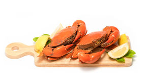 Boiled Serrated mud crab  on a wooden plate Stock Photos
