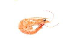 Boiled shrimp Royalty Free Stock Images