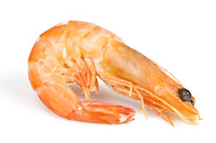 Boiled shrimp Stock Image