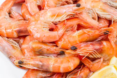 Boiled shrimp  background Royalty Free Stock Images