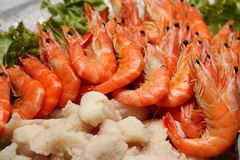 Boiled shrimp on ice Royalty Free Stock Images