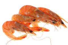 Boiled shrimp isolated Stock Photography