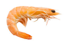 Boiled shrimp isolated on white background Royalty Free Stock Photos