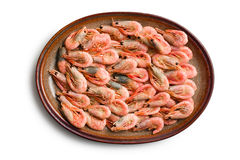 Boiled shrimp on plate Stock Photography