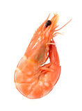 Boiled shrimp  on white Royalty Free Stock Image