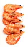 Boiled shrimp  on white Stock Images