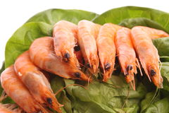 Boiled shrimps Royalty Free Stock Photo