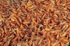 Boiled Shrimps. Bunch of boiled shrimps, Mediterranean or Asian cuisine royalty free stock photos