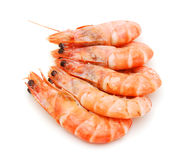 Boiled shrimps Royalty Free Stock Image