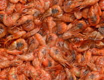Boiled shrimps Royalty Free Stock Photos