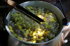 Boiled silkworm traditional folkways in thailand Stock Image