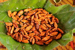 Boiled silkworm. Which are seasoned and eaten as a snack stock photo