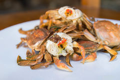 Boiled small crabs. On the white plate Royalty Free Stock Photography