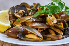 Boiled and spiced mussels dish Stock Photography