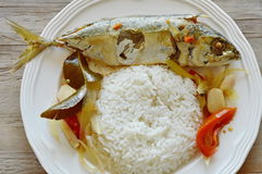 Boiled spicy mackerel with herb and rice on dish. Boiled spicy mackerel with herb and rice on white dish Royalty Free Stock Images