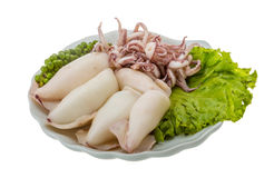 Boiled squid Stock Photos
