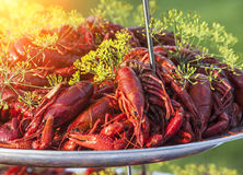 Boiled or steamed crawfish Stock Photos