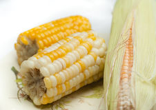 Boiled Sweet Corn and Cob Royalty Free Stock Photo