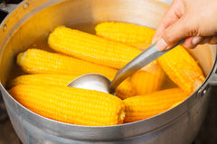 Boiled sweet corns Stock Photo