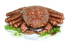 Boiled tasty crab  on a plate Stock Image