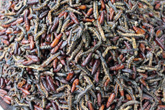Boiled warms for eat. Warms of butterfly that boiled for eat Royalty Free Stock Photos