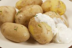 Boiled Young potatoes Stock Photography