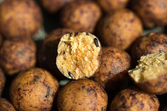 Boilies, fishing baits, close up Stock Photos