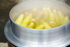 Boiling corn cobs Royalty Free Stock Image
