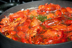 Boiling crawfish royalty free stock photography