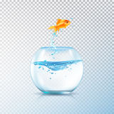 Boiling Fish Aquarium Composition. Fish jumping out bowl composition with realistic aquarium vessel and golden carp fish on transparent background vector Stock Photo