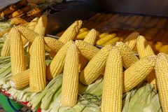 Boiling and fried corn Turkish style. A North American cereal plant that yields large grains, or kernels, set in rows on a cob. Its many varieties yield stock images
