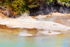 Boiling Mud Pool in Wai-O-Tapu Geothermal Wonderland, Rotorua, New Zealand. Copy space for text.  stock photography