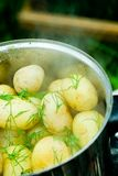 Boiling Potatoes. Closeup of potatoes with dill boiling in a large pot with steam rising from them.  Shallow depth of field Stock Photos