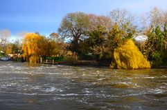 Boiling river water rushes past weeping willow trees. Early in an autumn morning royalty free stock photos