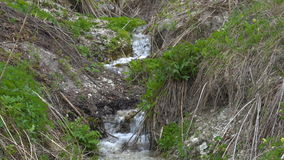 A boiling stream flows down the mountainside. Clear cold water moves quickly along the slope. The banks of the stream are overgrow stock video footage