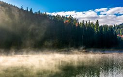 Boiling water of lake in spruce forest. Beautiful nature background in fine autumn weather Stock Photos