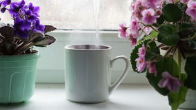 Boiling water is poured in cup.cup of coffee tea hot drink on window sill next to a beautiful home flower in a pot stock video