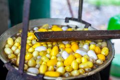 Boiling White and Yellow silkworm cocoons in the pot to make Silk Thread, Boil Silk Nest. In Thailand stock image