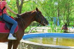 Boire de cheval. photographie stock