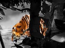 Boire de tigre illustration libre de droits