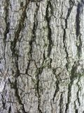 Bois Image libre de droits