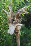 Bois Photos stock